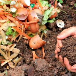 Enquête compostage